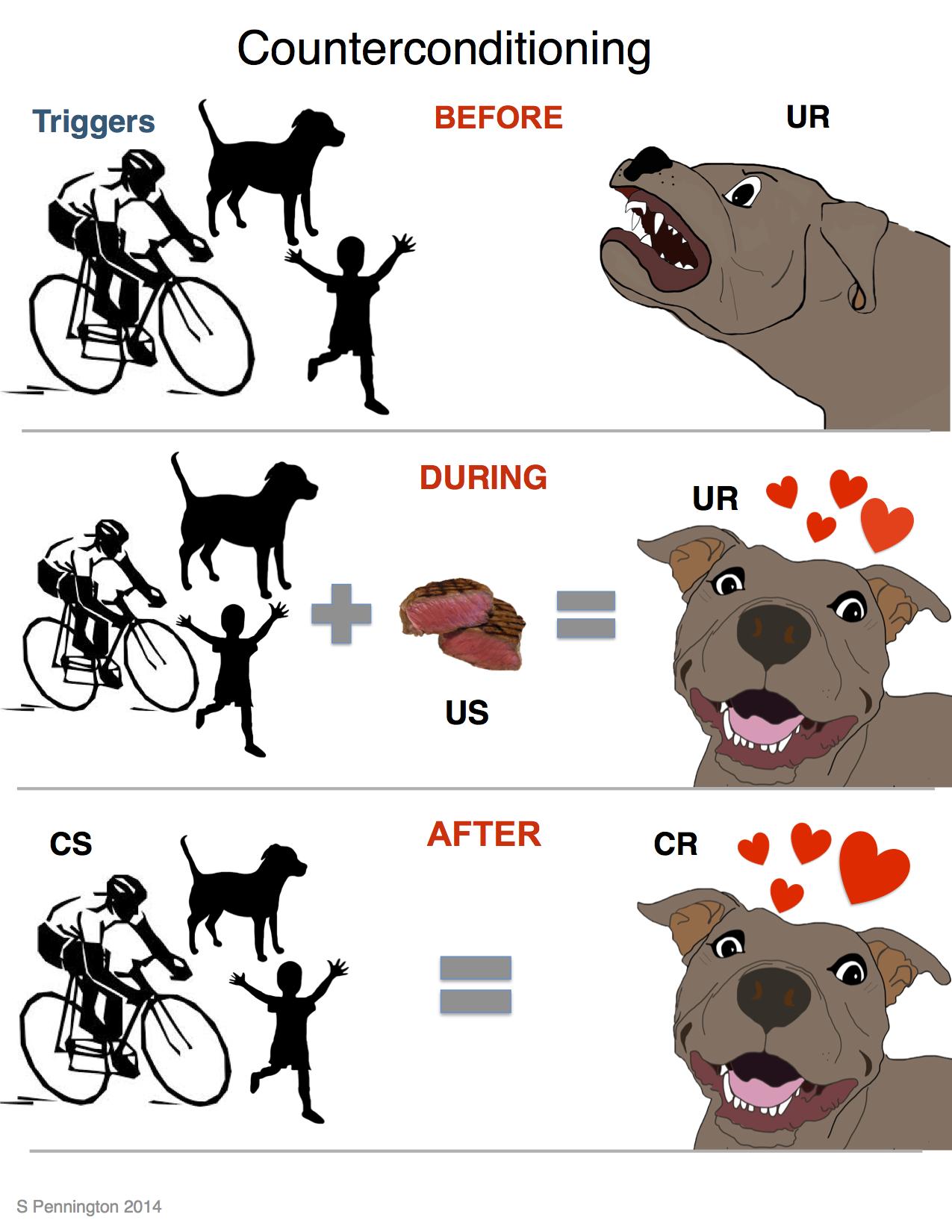 Dog Training Desensitization Counterconditioning